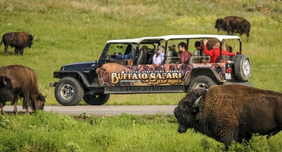 Buffalo Safari Jeep Tour Listed in Top 10 Best Safaris in the U.S.