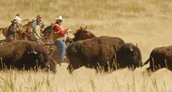 Buffalo Roundup Draws 21,000 Visitors to Custer State Park