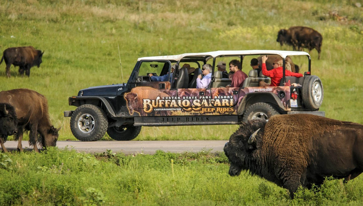 Jeep in the buffalo