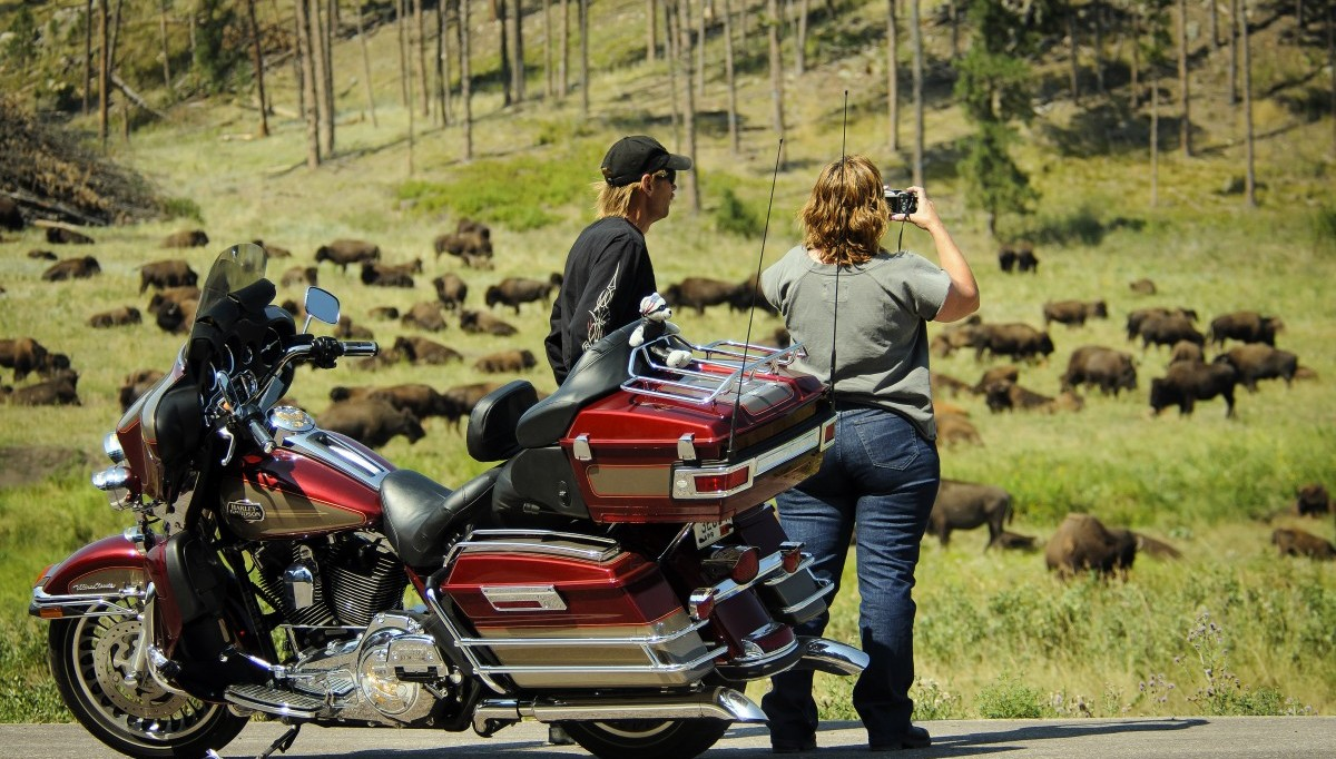 Motorcyles with Buffalo in the background