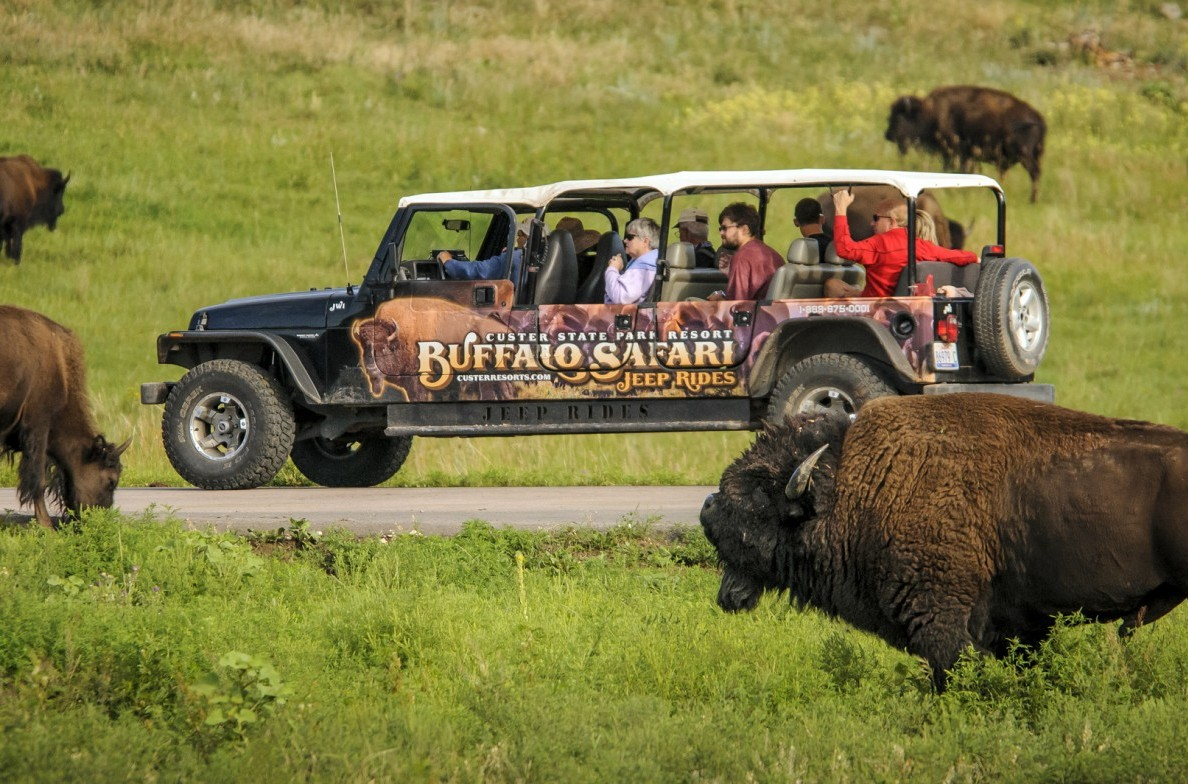 Get a glimpse of wild buffalo.